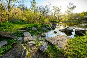 Early morning sunlight rakes across the Spring Trail Pond at the University of Wisconsin-Madison Arboretum during spring on May 11, 2020. (Photo by Bryce Richter / UW-Madison)